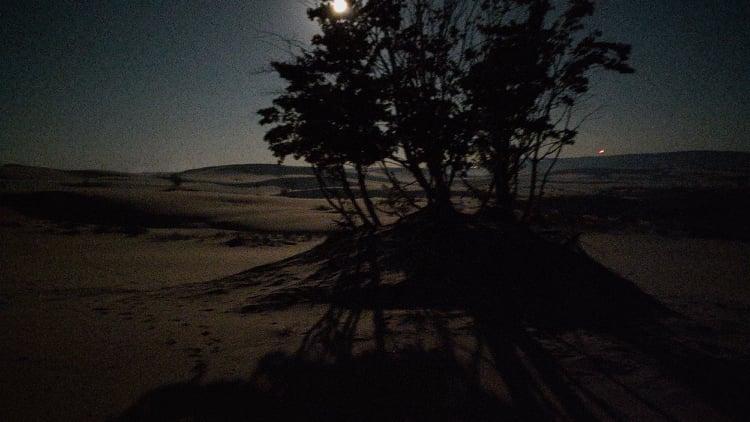In the MidnightSeason